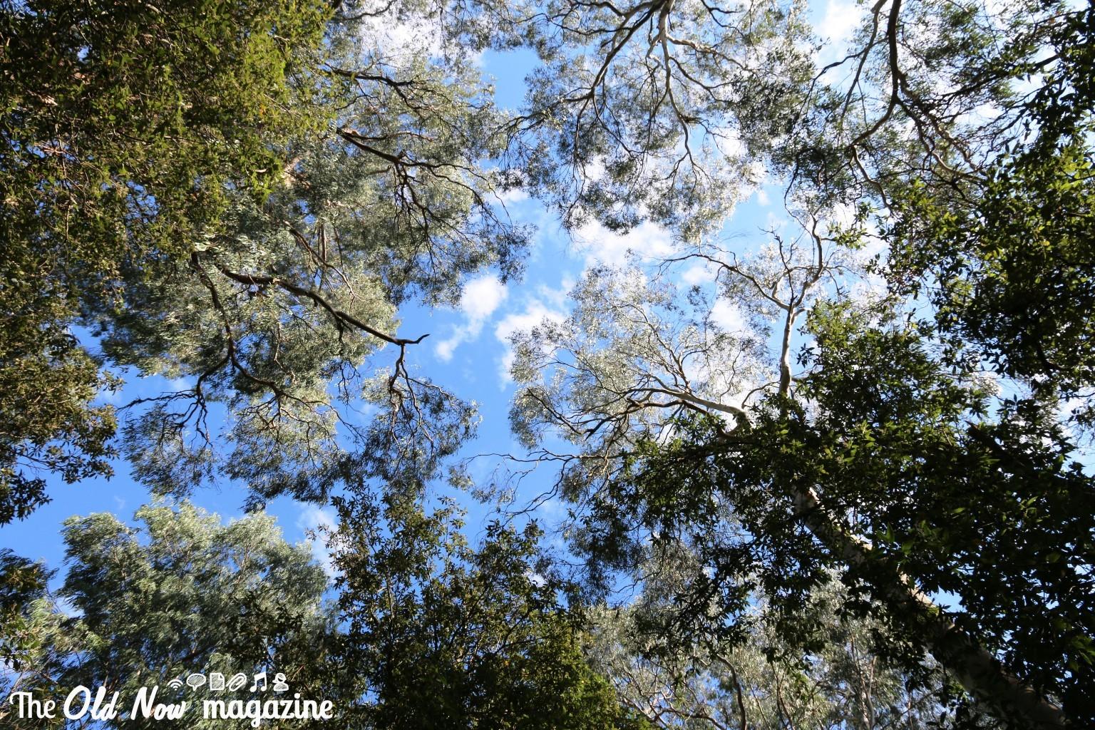 Healesville Sanctuary THEOLDNOW (1)
