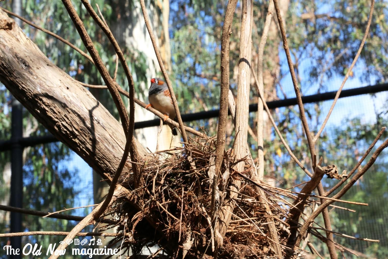 Healesville Sanctuary THEOLDNOW (189)