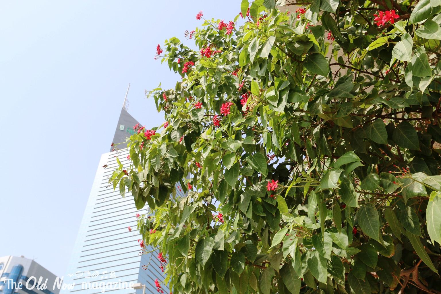 Abu Dhabi THEOLDNOW DAY 1 (5)