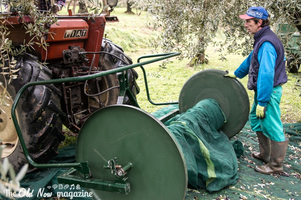 Consorzio Olio Garda DOP 03-1687