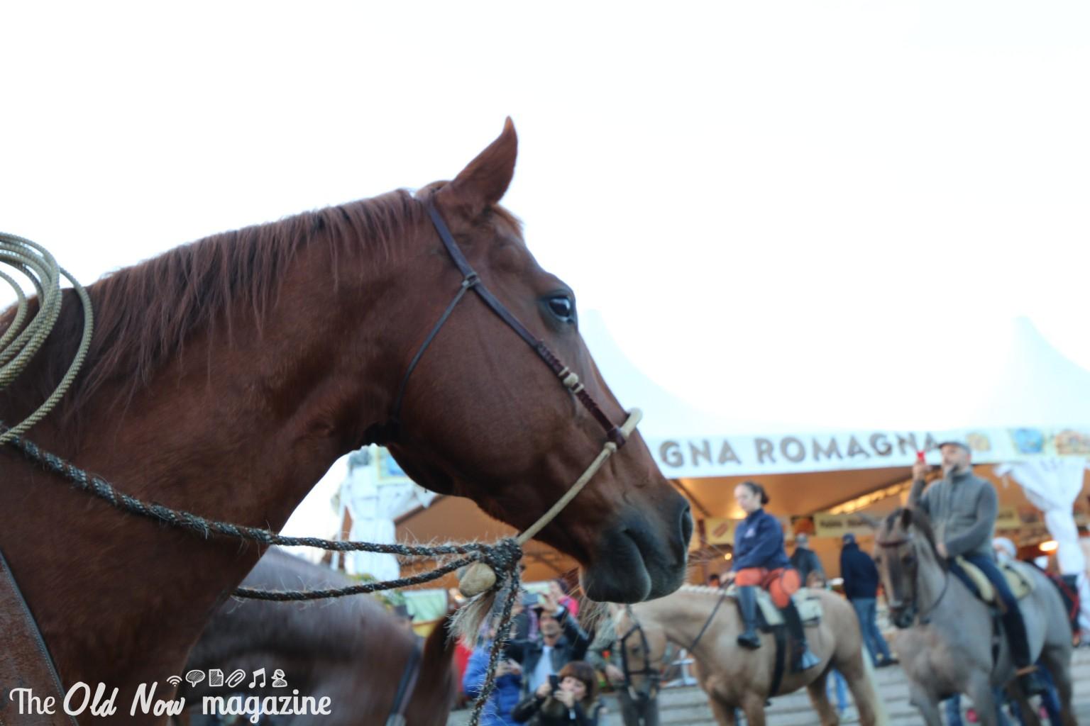 FIERA CAVALLI 2014 VERONA LONGINES THEOLDNOW (600)