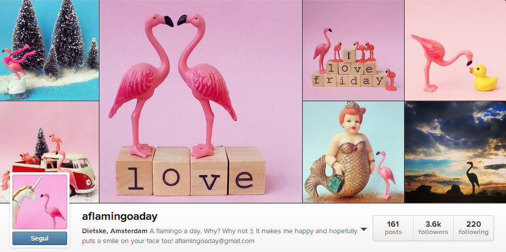 A Flamingo A day gallery on instagram