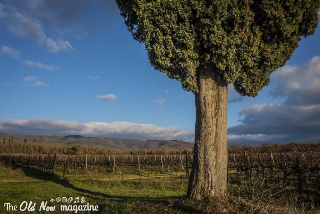 I colli del Chianti X100T - ISO: 400 - F:11, 1/500 Foto: Simone Raso