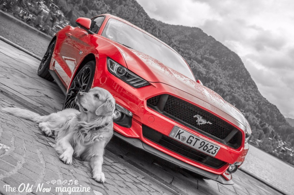 Ford Mustang (16)