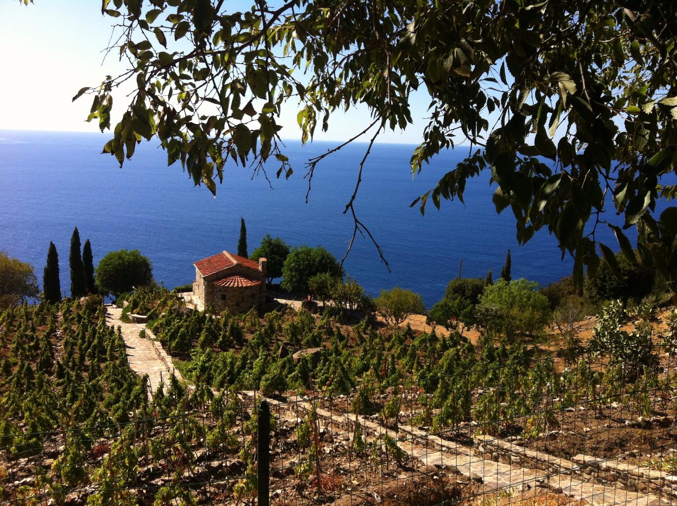 Guida Isola d'elba - degustazione vini