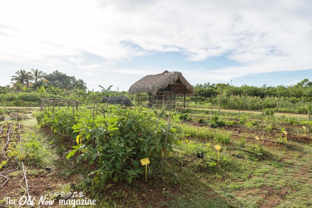 Repubblica Dominicana - 0016