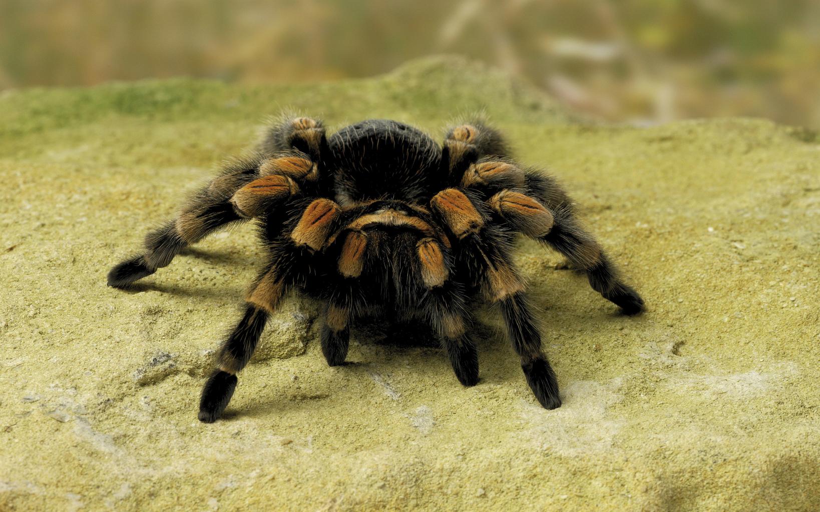 spiderr