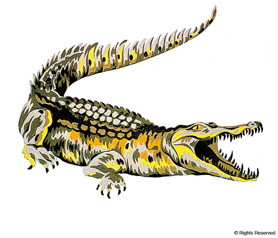 Il coccodrillo disegnato da Robert George nel 1927