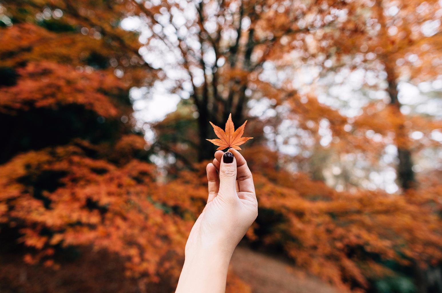 visitare Londra in autunno
