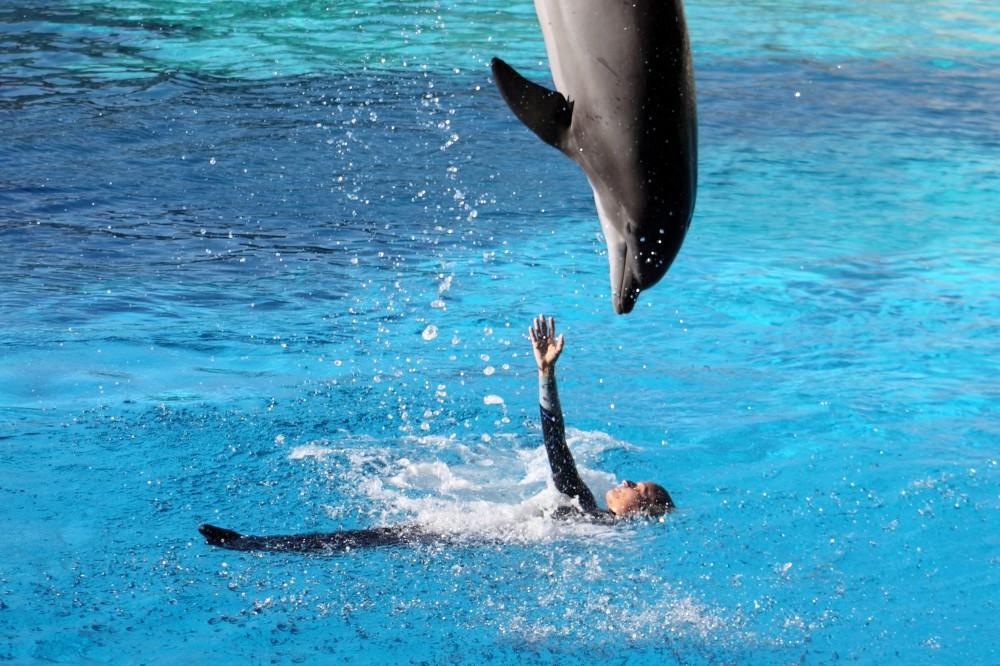 oltremare delfini
