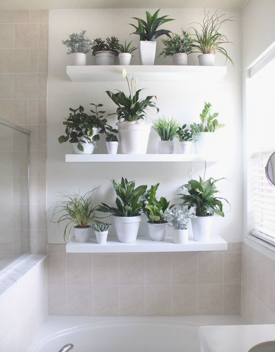 piante2